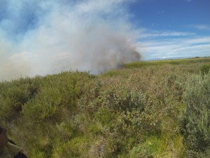 The fire started on the western side of Rondevlei. It was almost extinguished, but got into the reed beds and was driven by the south-westerly wind.