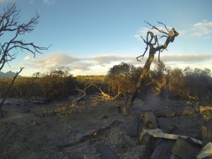 Pretty much nothing remains of the Otter Bush Camp after the fire has passed through it.