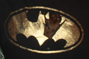 Bat man & Friend (1)