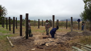 The Eland boma poles are planted in anticipation for the animals arrival in late October.