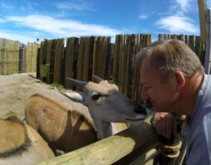 An Eland checking Theo's aftershave